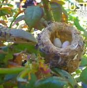 lizard next to bird nest with eggs