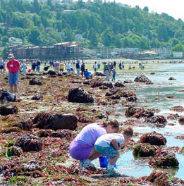 The Seattle Aquarium calls on citizen scientists to monitor intertidal areas in the Central Puget Sound.