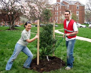 caseytrees_scienceforcitize