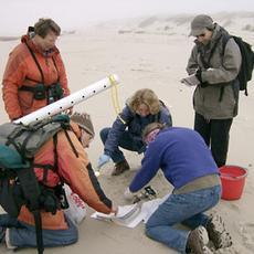 Volunteers survey a local beach for COASST.