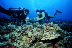 REEF fish survey: volunteer divers record their observations.