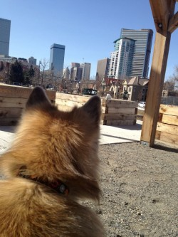 Mia joins in a citizen science adventure