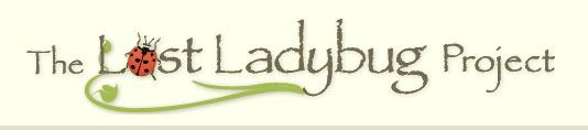 Lost laydbug 1