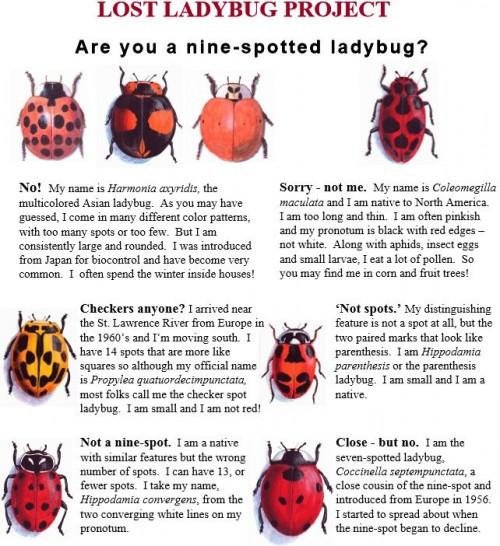 lost ladybug 2
