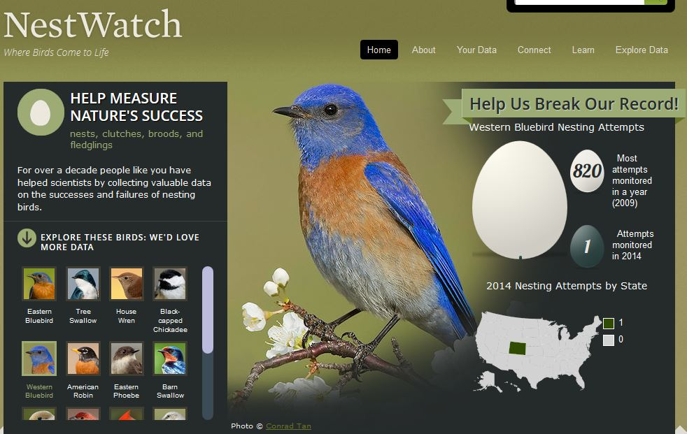 Nest watch home page