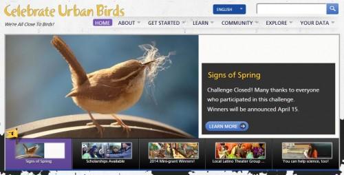 urban birds project