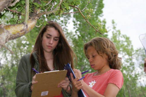 Participants record observations for Project BudBurst.