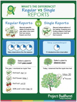 Various methods of reporting for Project BudBurst. Photo courtesy of Project BudBurst