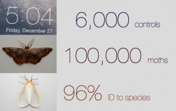 Moth statistics.