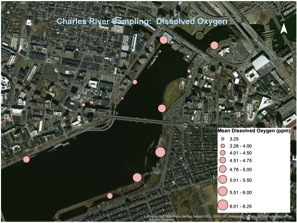 Average dissolved oxygen measurements along the Charles River as collected by youth data collectors on the Charles River. Graphic by David Sittenfeld, Museum of Science.