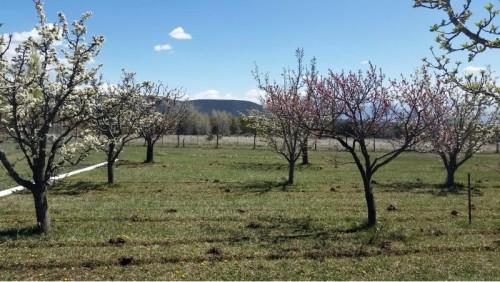 April in Redlands Mesa. Source: iSeeChange