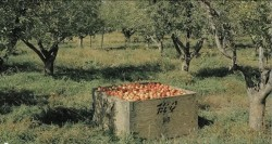 Listen to farmers discuss the iSeeChange project. Source: iSeeChange.