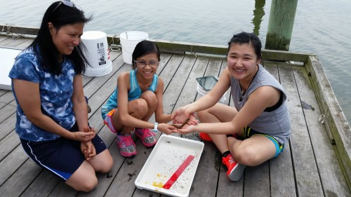 Some young volunteers help measure fish and eels. Photo by Monaca Noble.