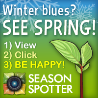 Season Spotter Ad Winter Blues and Green Leaf