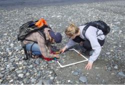 Volunteers monitor marine debris as part of COASST program. Image credit: COASST