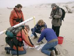 Volunteers process birds as part of COASST program. Image credit: COASST