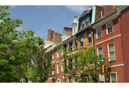 city trees in Philadelphia with brick row house buildings behind them.