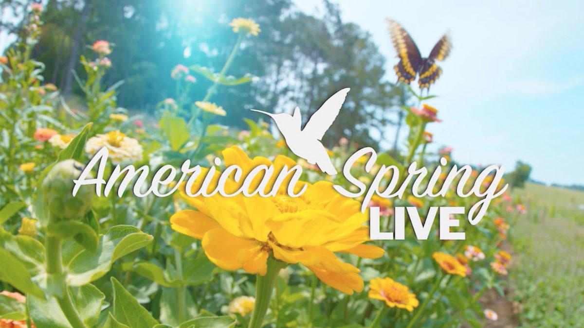 American Spring LIVE