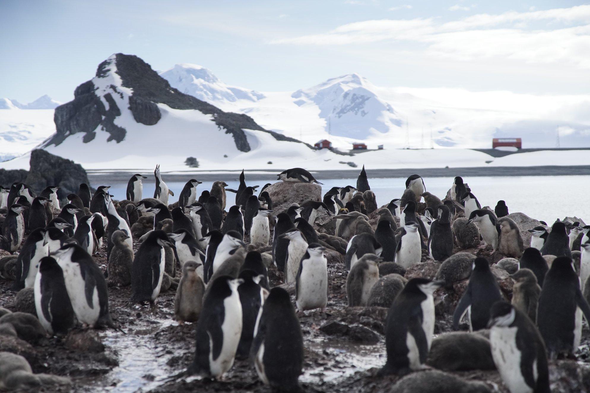 Antarctic Citizen Scientists