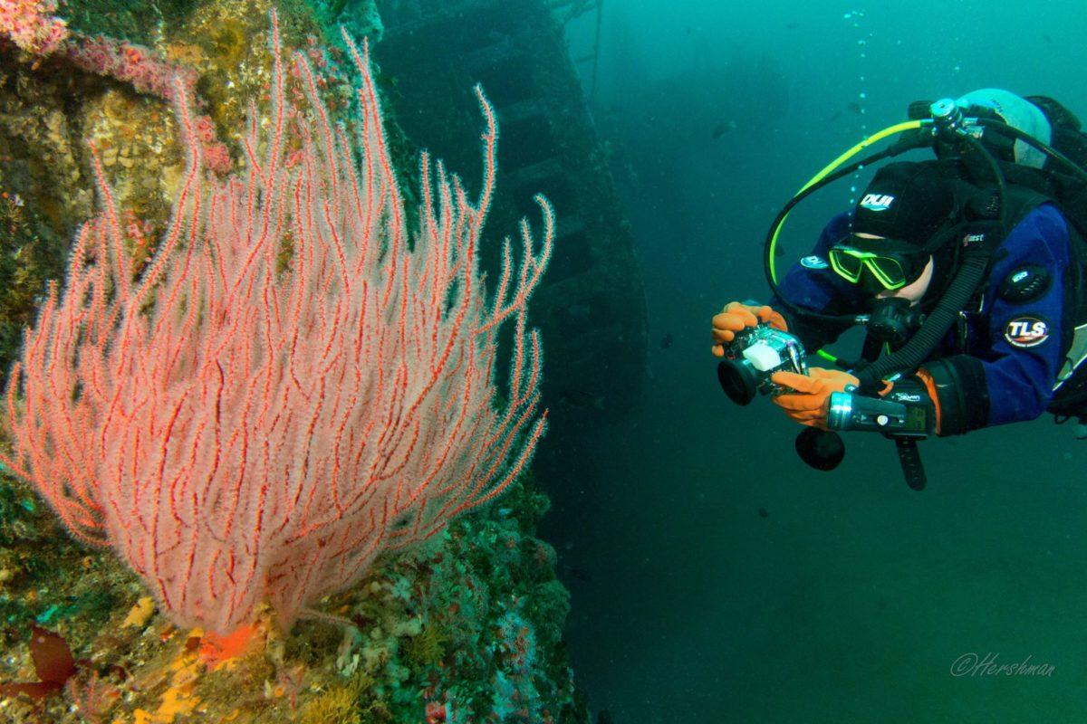 citizen science ocean sanctuaries