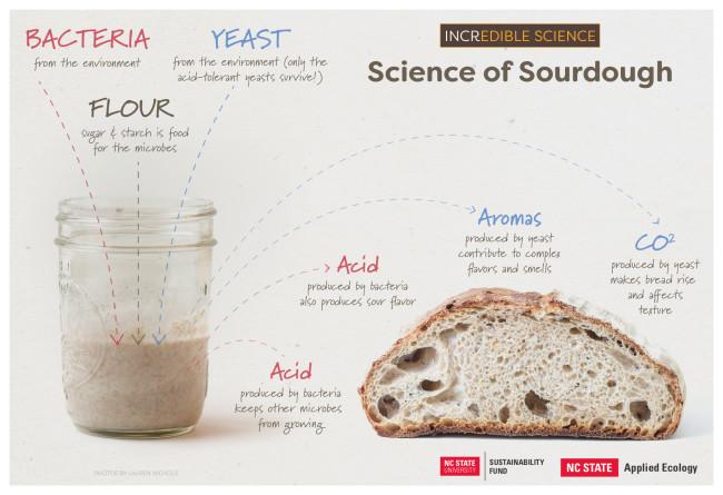sourdough science