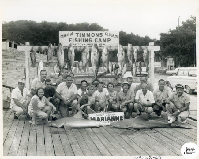 old sport fishing photo with sharks 1960s daytona beach
