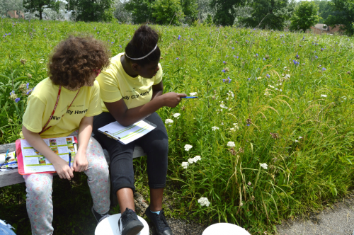 Budburst participants collect data on plants.