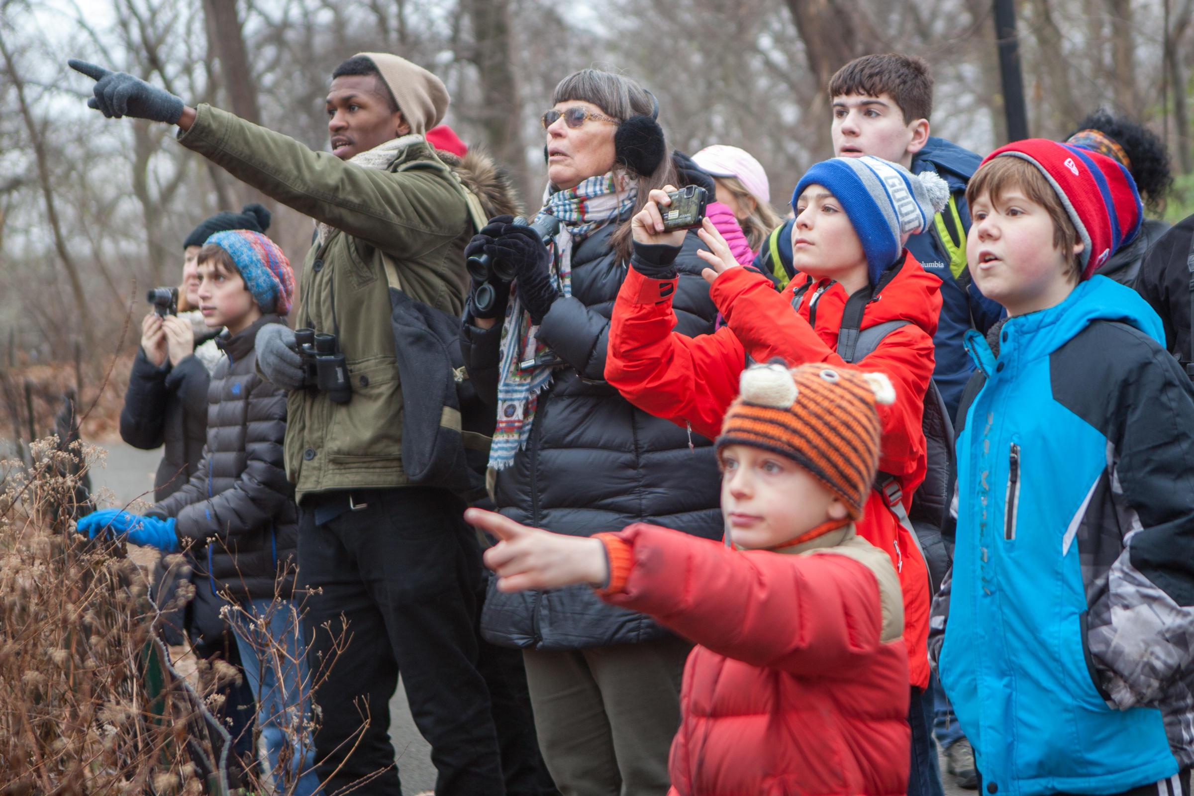 christmas bird count birder volunteers