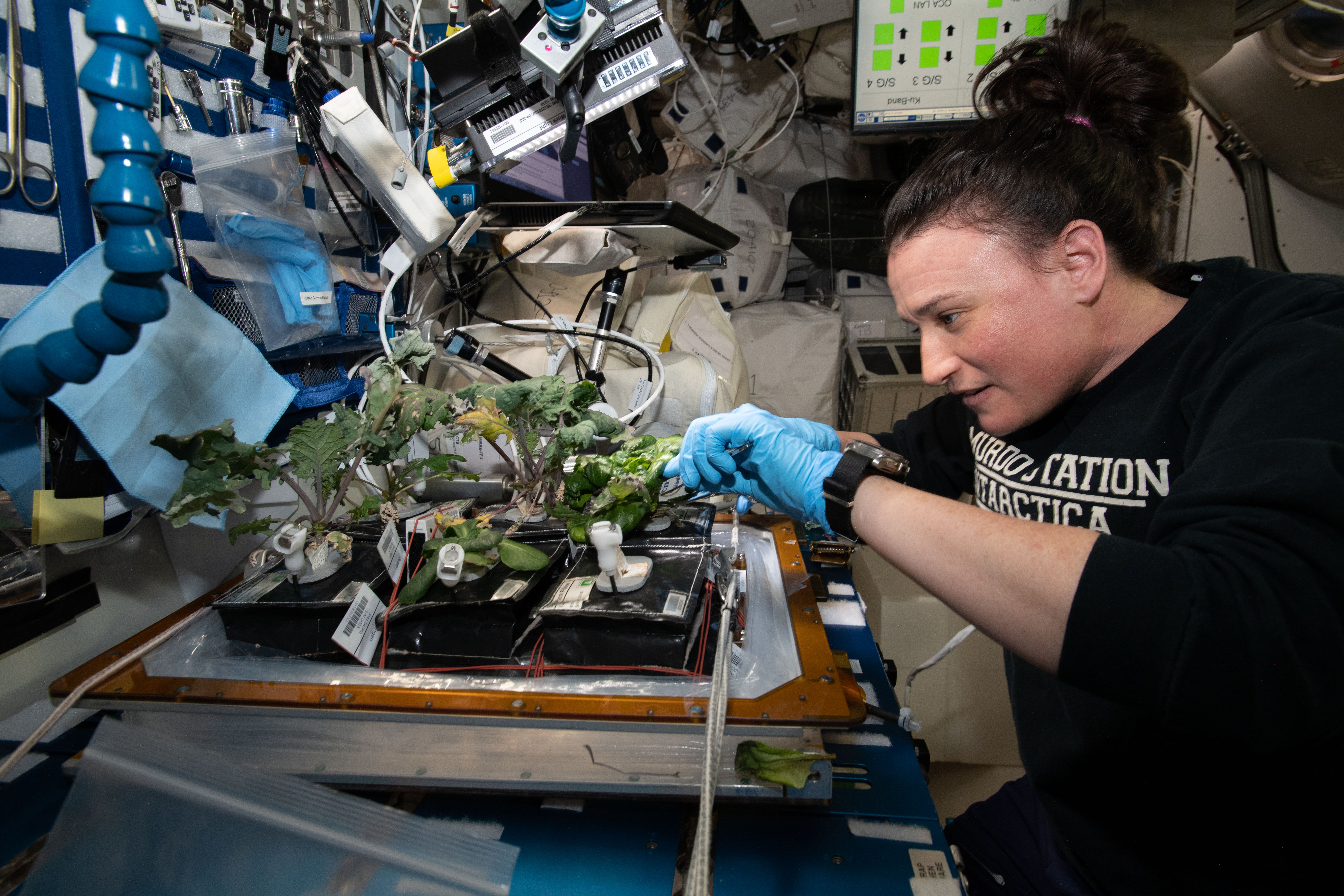 Learning to grow vegetables in space is one way to contribute to NASA citizen science projects.