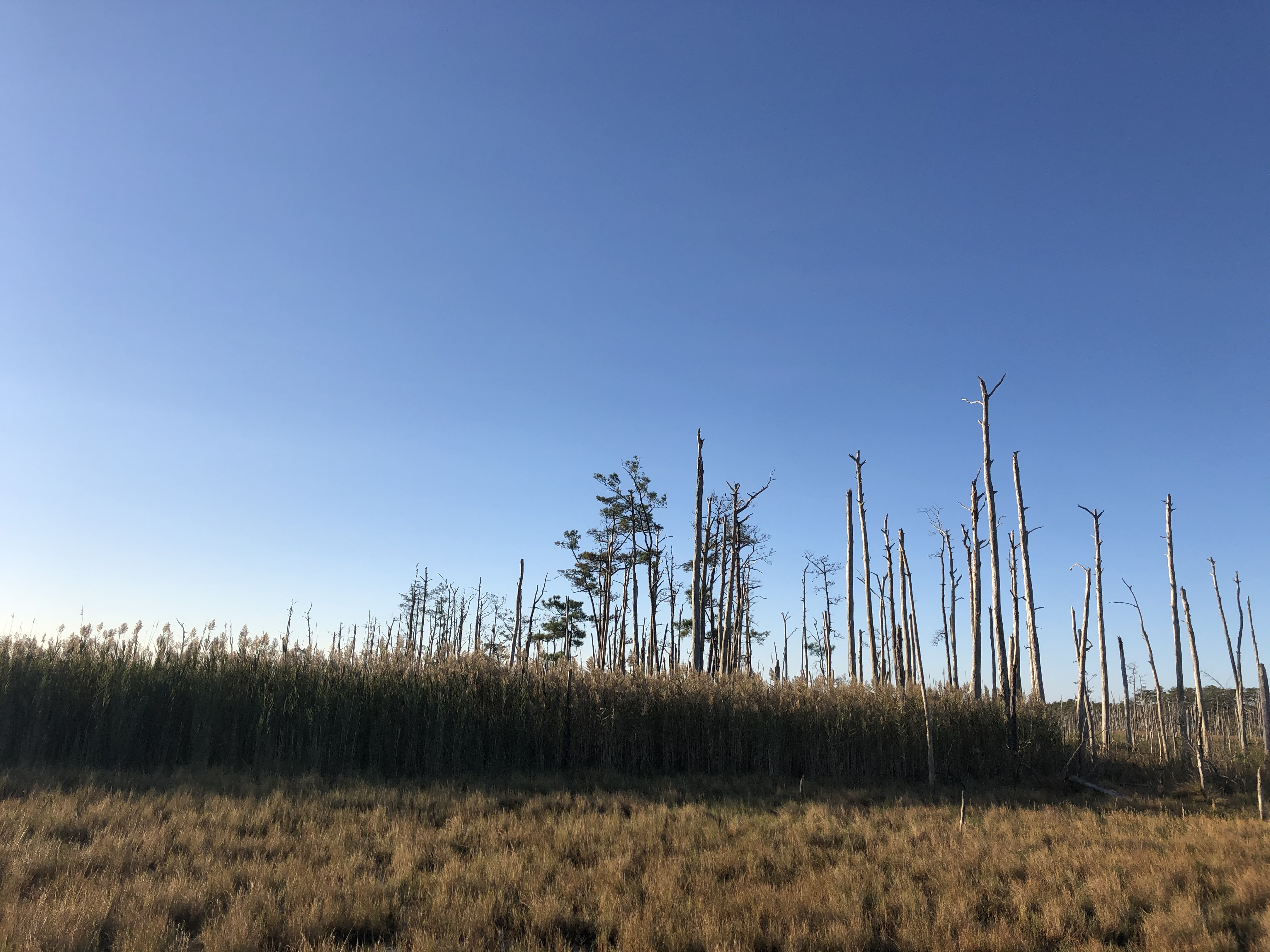 stand of dead trees ghost forest