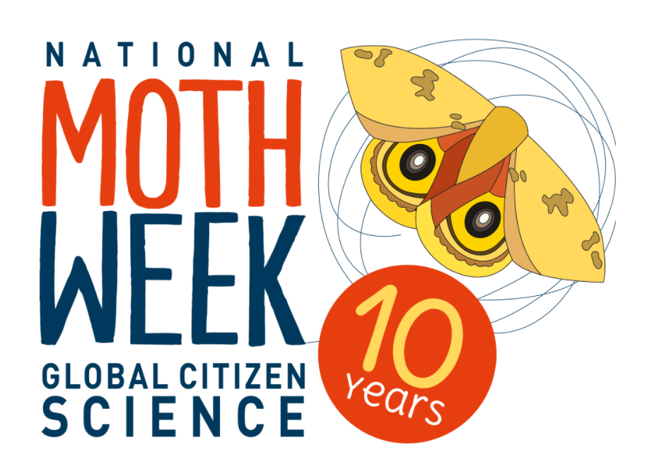 """Text says """"National Moth Week, Global Citizen Science, 10 years"""" alongside a cartoon drawing of a moth."""