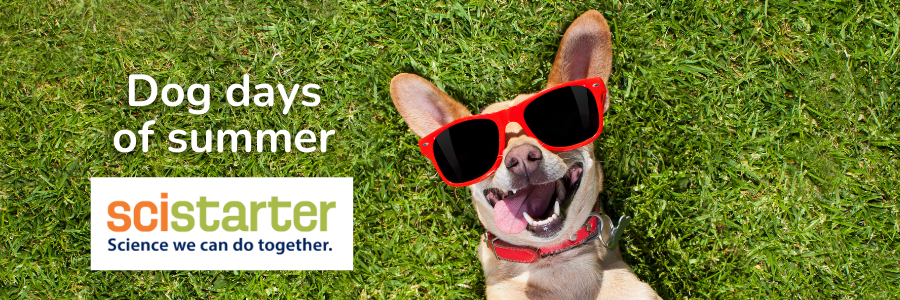 Dog wearing sunglasses with the text Dog Days of Summer: Scistarter. Science we can do together.