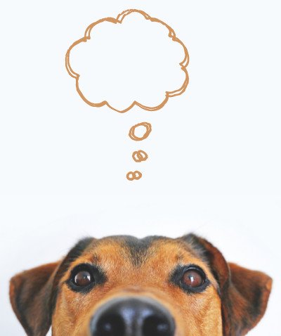 Dog with thought bubble