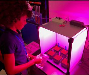 Lit by pink fluorescent lights, a kid waters pots of soil in a laboratory box.