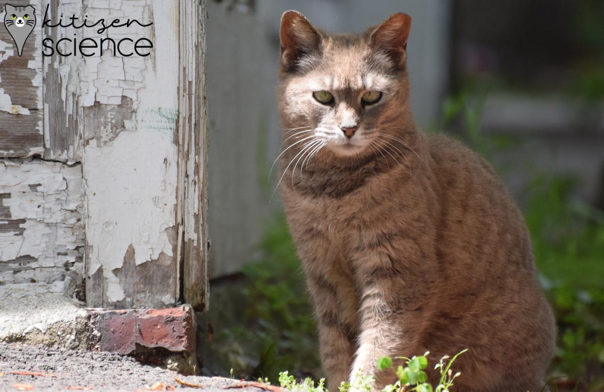 A brown striped cat sits in the shade of a wall with white flaking paint. The words