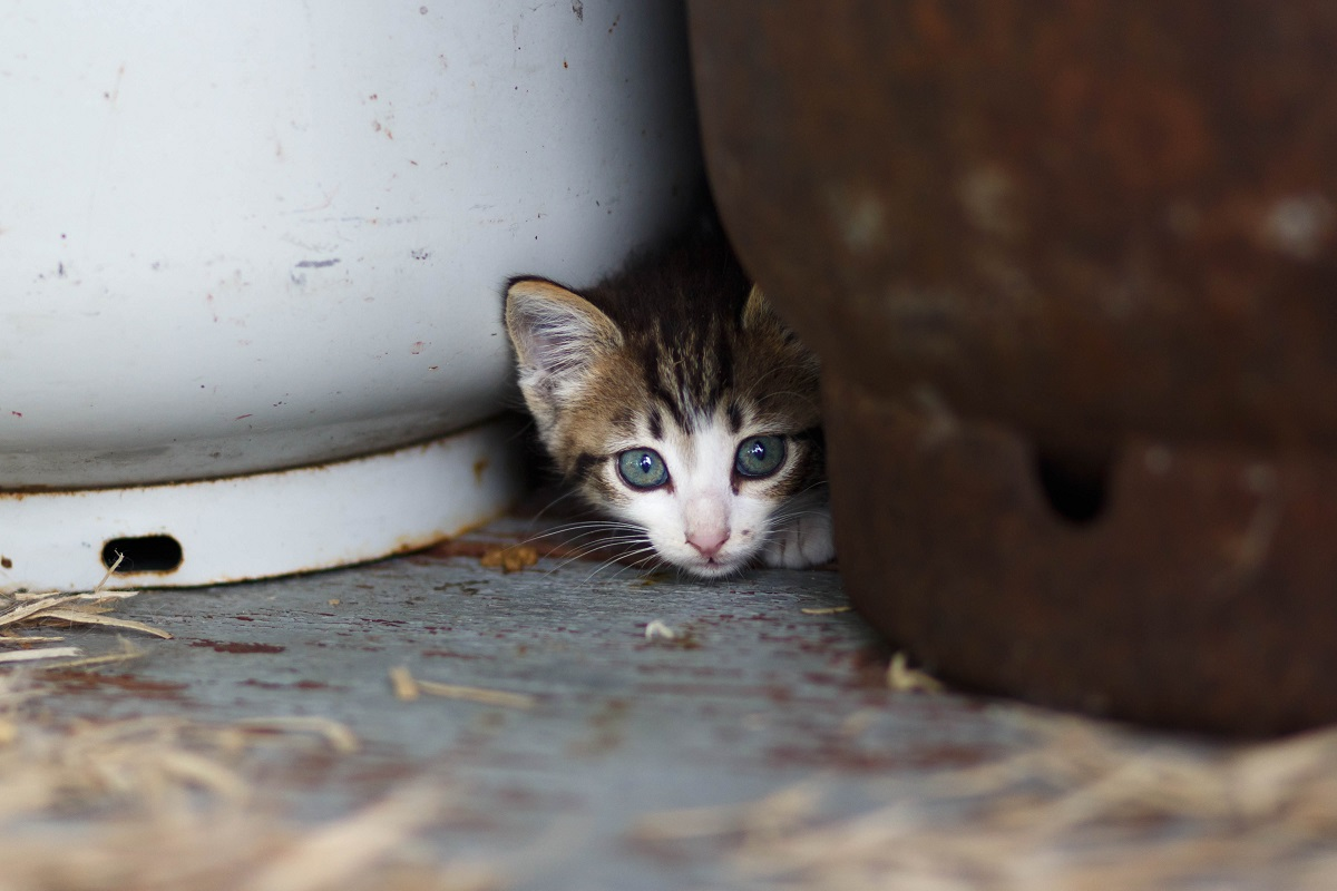 A kitten peers out from between two large pots.