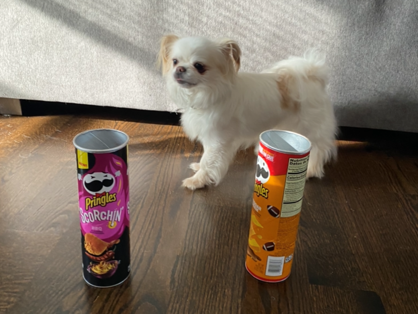 A small white dog stands behind two pringles cans set on the floor.