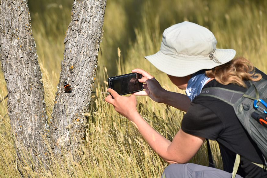 A women taking a picture of a butterfly with a smartphone.