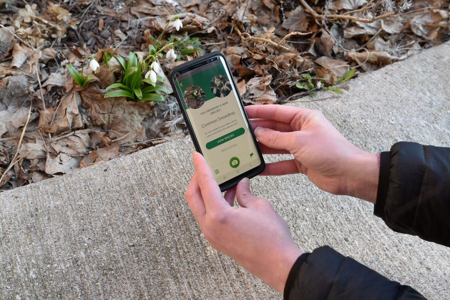 Using the iNaturalist app to identify plants.